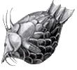 Эмблема клана: Булькающие толстолобики